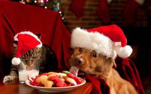 Christmas Cat & Dog