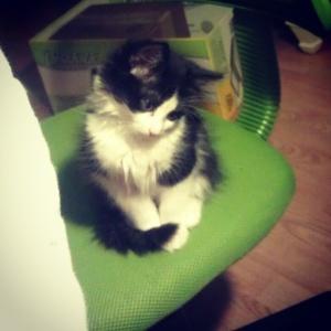 Lola on chair